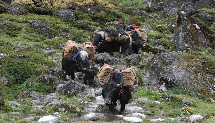 Pony during Bhutan Trek