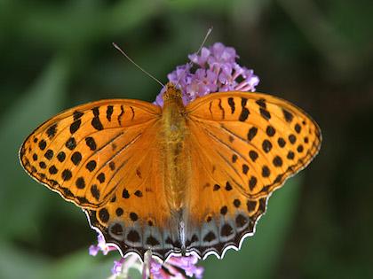 Butterfly tour in Bhutan